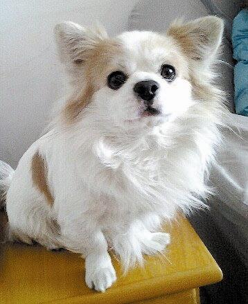 """这条名叫""""木木""""的金毛犬也因此被居民戏称为""""木三千""""."""